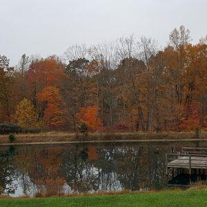 Cabin with Lake at buck run